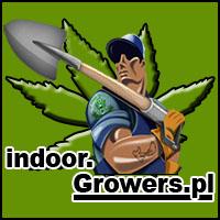 uprawa, hodowla, indoor, w domu, marihuany, konopi, cannabis